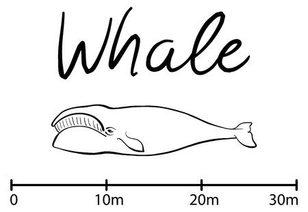 Ilustración De Las Siluetas De Las Diferentes Criaturas Del Mar ...
