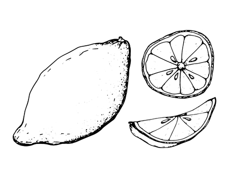 Black and white fruit sketch hand drawing isolated vector illustration Vectores