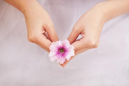 nicety: Petunia flower in hand