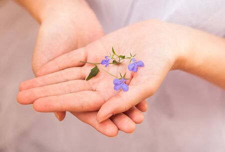Delicate blue flower in female hands photo