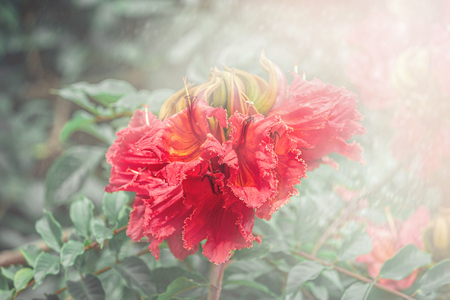 delicate red flower in the rays of dawn