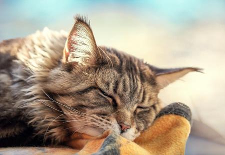 Fluffy cute cat sleeping in the sunlight