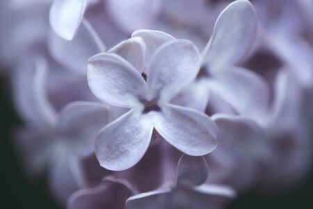 Blurred abstract background with lilac flowers