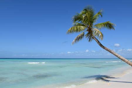 Beach in the Caribbean Sea. Punta Cana. Saona Island
