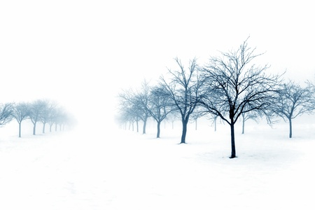 Foggy winter with snow and trees