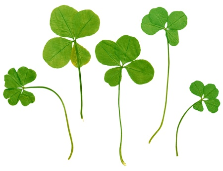 four objects: Set of green four leaf clovers