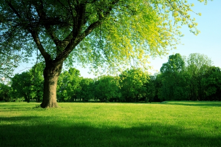 Green meadow in park Stock Photo