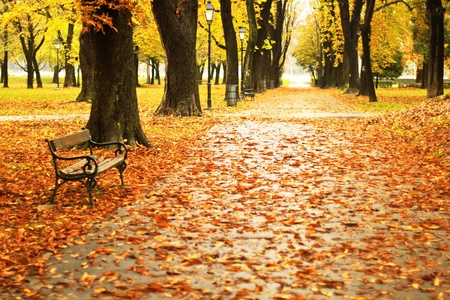Autumn park path and a bench Stock Photo