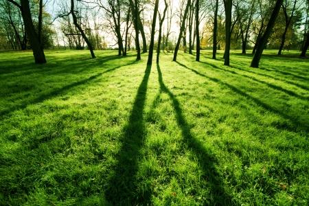 foresta: Mattina parco erba Archivio Fotografico