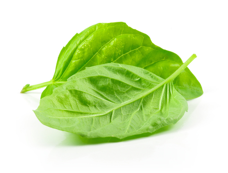 Isolated leaves of basil on white