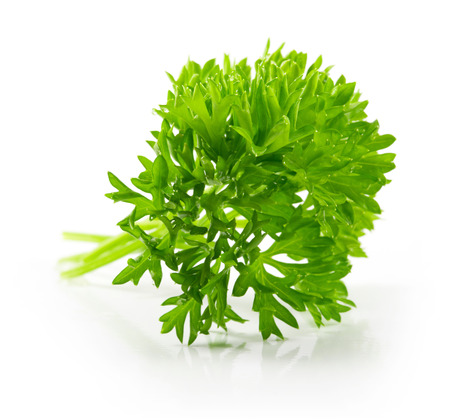 Isolated bunch curly parsley on white