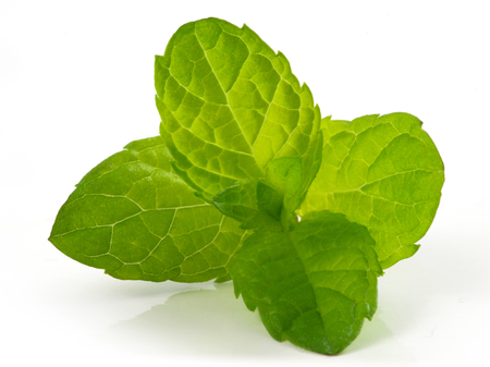 fresh mint leaves isolated on white