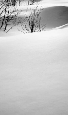 Soft snowbanks and bare plants in black and white.
