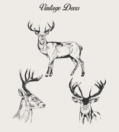 Vintage Deers