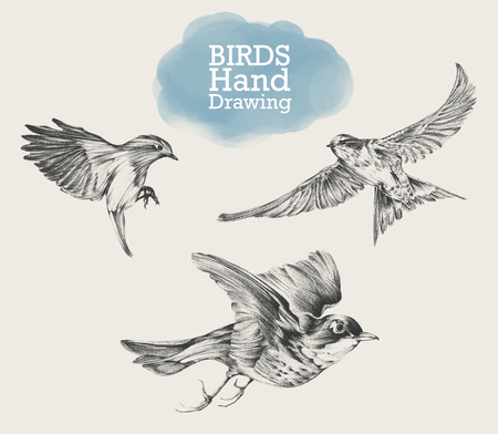 trill: Hand drawn set of birds, drawing illustration