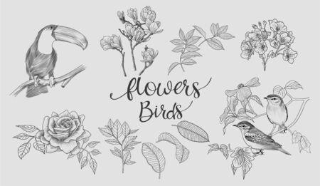 warble: Floral & Birds Illustration