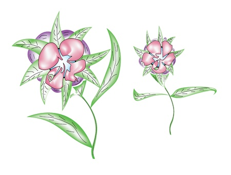 revivalism: illustrated pink flowers on a white background