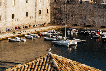 The seagull sits on a roof tile on the roof of a building in the bay of the old city in Dubrovnik, Croatia. Reklamní fotografie