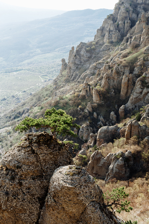 Green tree on the sharp edge of the rock in the Valley of Ghosts in the Republic of Crimea.