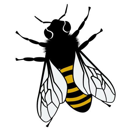 domestic animals: Vector cartoon theme of domestic animals bee