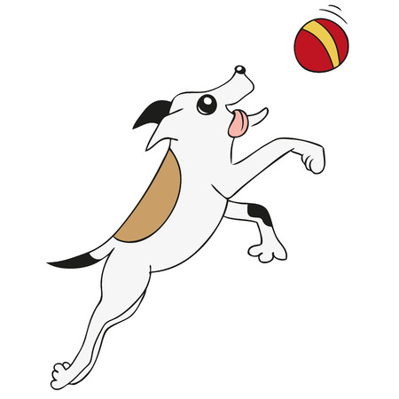 jack russell: Dog playing