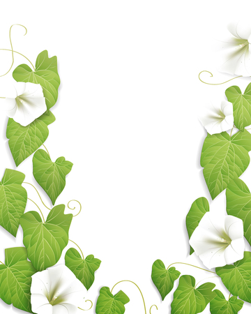 flowers background:
