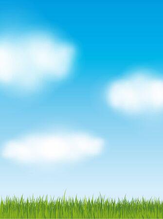 green grass and blue sky: Green grass blue sky