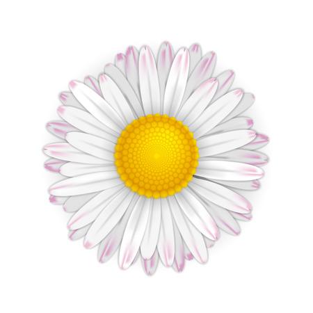 daisy petals: Daisy