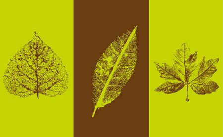 triptych: Leaves background Illustration
