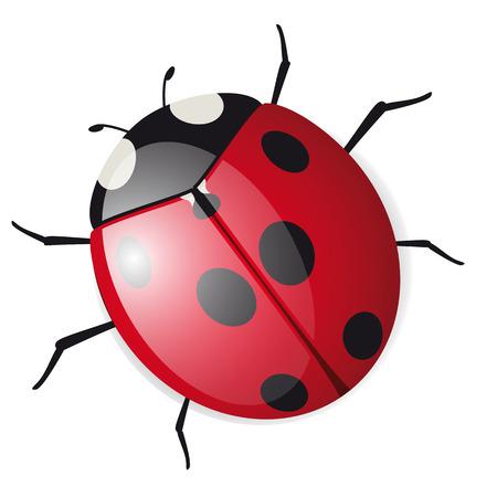 Cute ladybird Ilustracja