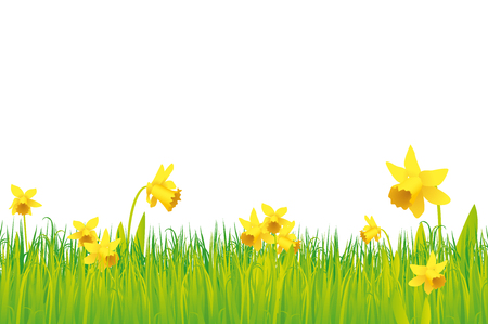 daffodils: Daffodils background