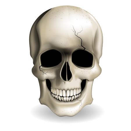 swank: Skull vector
