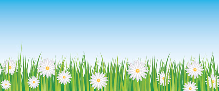 sweet grass: blue sky and daisies full vector banner