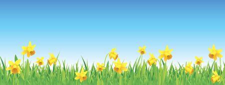 Hübsche Narzissen für Frühling voller Vektor Banner