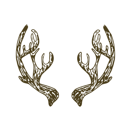 Reindeer antlers illustration vector isolated on white bacjground