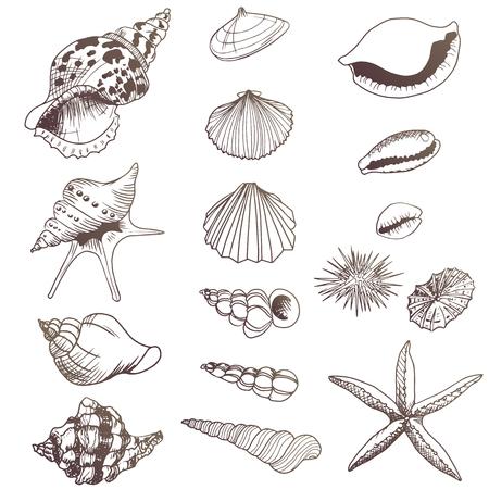 Conjunto de elementos de ilustraciones de conchas marinas
