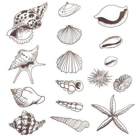 Set of seashells illustrations   elements Иллюстрация