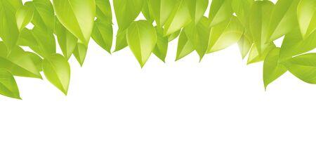 Spring sweet green leaves illustration large banner