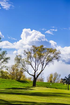 Baum auf dem schönen Golfplatz. Standard-Bild - 80749152