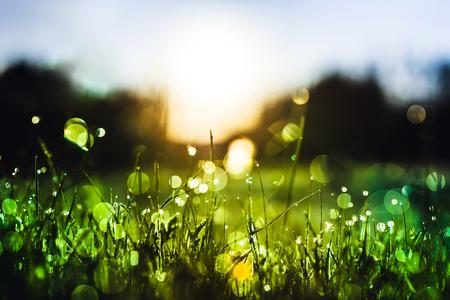 Grünes Gras mit Tautropfen auf dem Regengebiet. Natur frisch im Freien Hintergrund Standard-Bild - 80924246