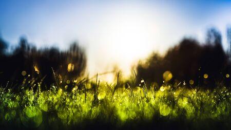 이슬 함께 푸른 잔디 비 필드에서 삭제합니다. 자연 신선한 야외 배경 스톡 콘텐츠
