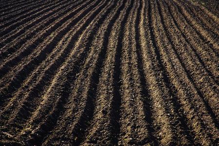 Schwarzes Boden gepflügtes Feld. Erdtextur. Rustikaler Hintergrund Standard-Bild - 80869375