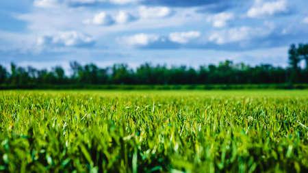 Eine große grüne Wiese und ein blauer Himmel Standard-Bild - 81361596