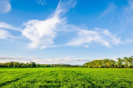 Grüne Felder und blauer Himmel in der Ukraine Standard-Bild - 81670459