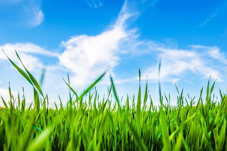 푸른 잔디와 푸른 아름 다운 흐린 하늘