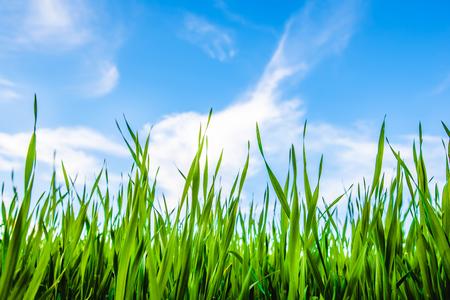 Grünes Gras und blauer schöner bewölkter Himmel Standard-Bild - 81670850