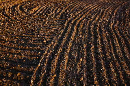 Black soil plowed field. Earth texture. Rustic background