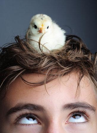 origen animal: Golden pollito recién nacido niño de pie en la cabeza, cerca