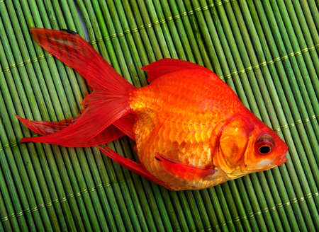 unstuck: Goldfish standing on a white table Stock Photo