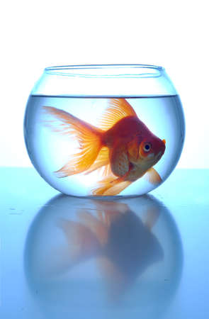 cramped: A goldfish cramped in a small bowl, close up